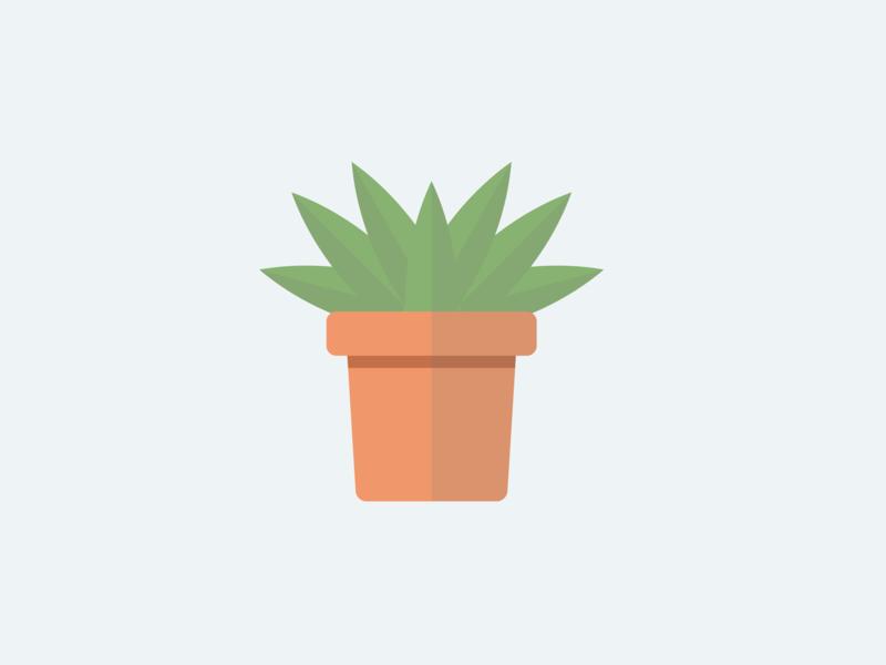 Steve drawing minimal shadow flat design cactus plant illustrator