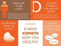 6 Ways Kidneys Keep You Healthy illustration infographic