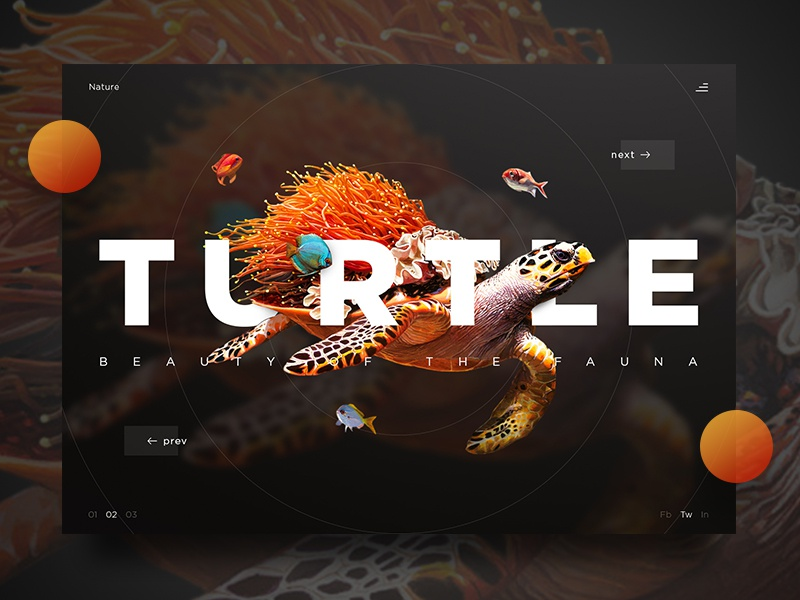 Turtle turtle art design landing page photography product ui ux website fish nature