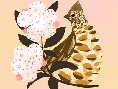 Pennsylvania State Bird & Flower botany flower bird pennsylvania illustration