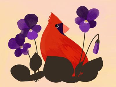 Illinois State Bird and Flower botany flower bird illinois illustration