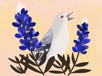 Texas State Bird and Flower botany flower bird texas illustration