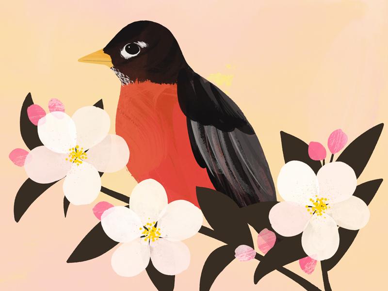 Michigan State Flower illustration bird flower botany painterly home sweet home apple blossom robin michigan