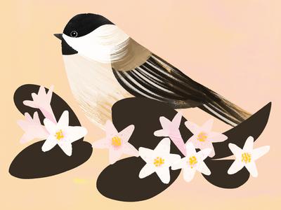 Massachusetts State Bird & Flower mayflower chickadee state bird boston massachusetts illustration botany painterly