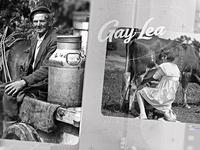 Gay Lea | Style Frame 01