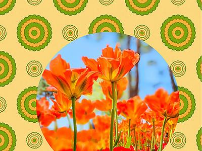 Tulip----Hitachi Seaside Park graphicdesign graphicart collage design photosop ひたち海浜公園 tulip