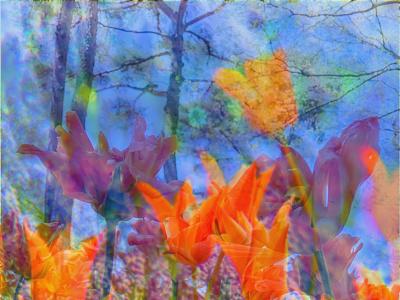 photomontage1 tulip photomontage flower graphicart photoshop ひたち海浜公園
