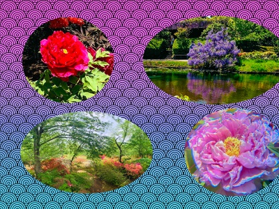 Beautiful flowers in spring season 牡丹 藤 つつじ 清水公園 spring photoshop flowers