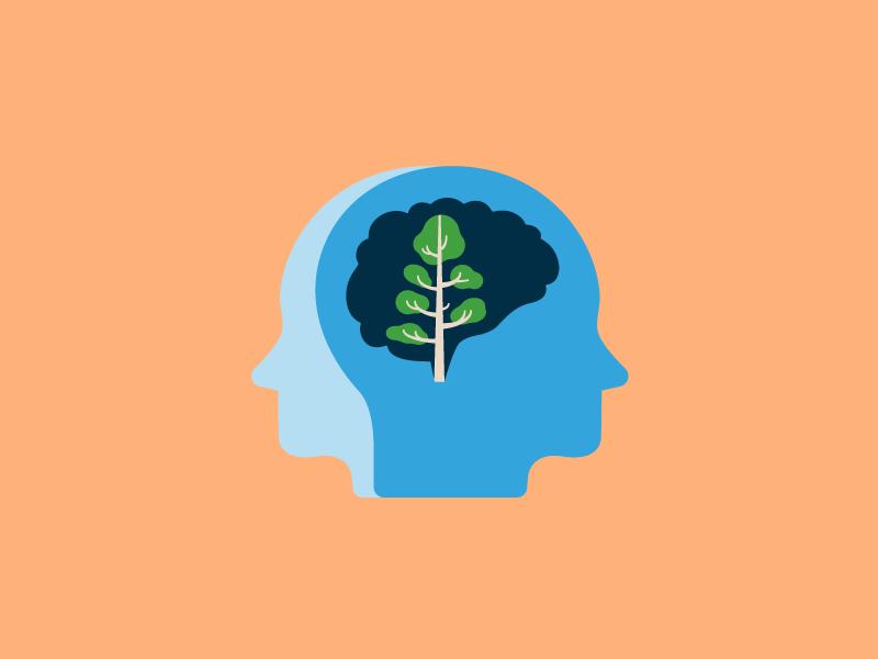 Brain and head