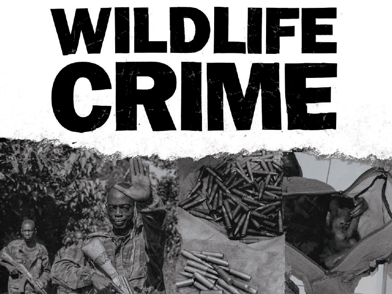 Wildlife Crime Brochure & Typography print texture diy dark gritty type typography brochure wildlife crime