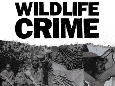 Wildlife Crime Brochure & Typography