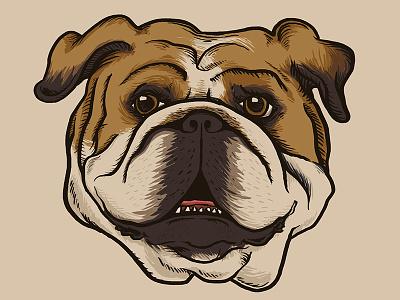 Porterhouse english bulldog bulldog dog puppy pup hound animal beast pet mascot illustration drawing drawn university
