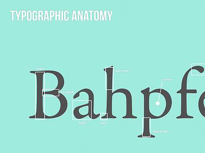 Typographic Anatomy type typography anatomy typographic anatomy