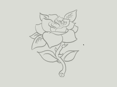 Rose Time-Lapse vector illustration rose illustration vector