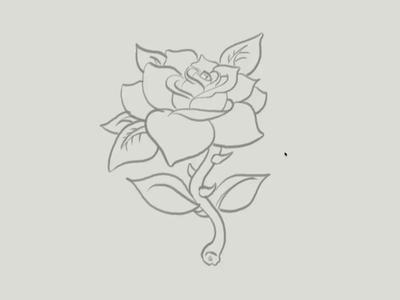 Rose Time-Lapse vector illustration rose illustration vector