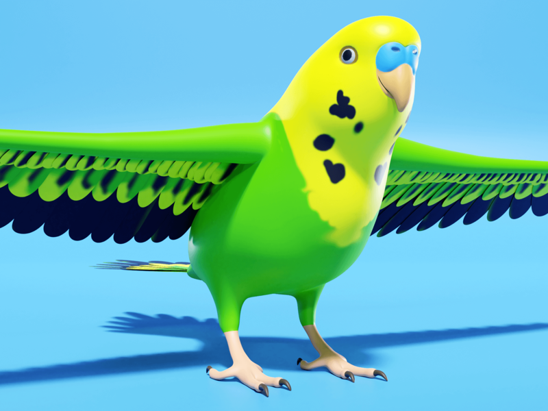 Parakeet game development game dev 3d model parakeet budgie lowpoly low poly blender3d blender 3d art cartoon design illustration 3d video game game