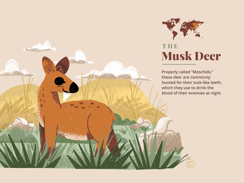 The Musk Deer design mountains grasslands landscape illustration animal deer