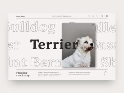Woof Woof color branding minimal typography interface concept web design web design product uiux ui