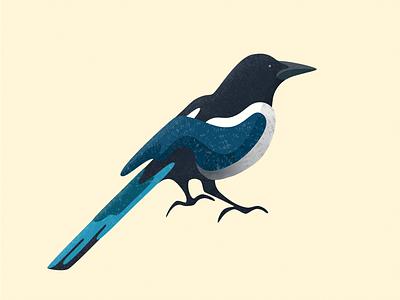 Ekster (Magpie) art magpie affinity designer vector nature illustration bird