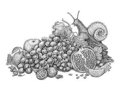 Luxury Of Autumn Textures ink texture walnut pomegranate tangerine nature fruits sketch black and white art grapes snail