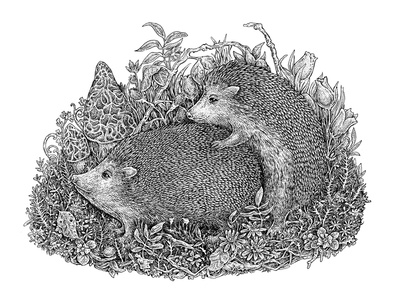 Hedgehogs' life, Part I forest natural mating cute funny sketch black and white ink nature animal art hedgehog