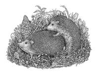 Hedgehogs' life, Part I