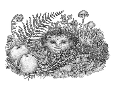 Hedgehogs' life, Part II flora and fauna apple forest natural cute sketch black and white ink nature animal art hedgehog