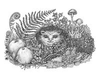 Hedgehogs' life, Part II