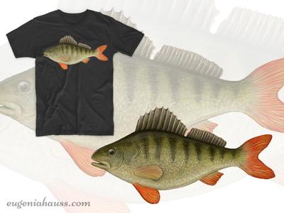 Perch on T-Shirt realistic fauna animal illustration fish digital art digital painting art perch apparel design