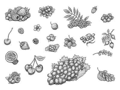 Berries cherry tasty yummy food raspberry strawberry set grapes illustration sketch berry berries