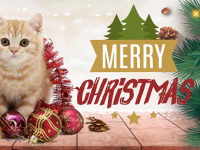Christmas Cover Photo photoshop photography social media modern design coperate