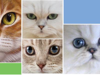Cats Cover Photo facebook creative minimal social media design