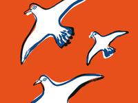 SUQ_03 - seagulls