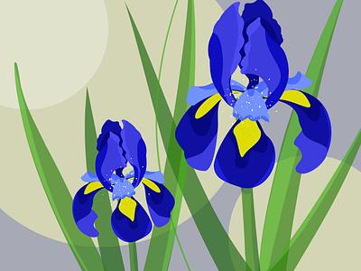 Flowers арт ирисы цветы design vector illustration