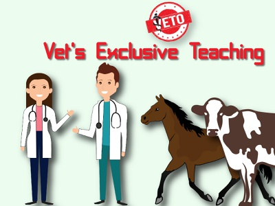 Vet Poster Illustration vector illustration