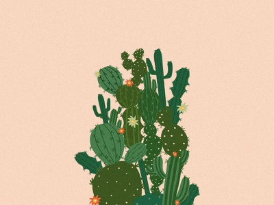 Cactus drawing graphic designer artwork artist illustration digital illustration design cactuses plants cactus illustration cactus digital illustraion digital painting illustrations digital art illustration designer illustration art digital illustration illustrator