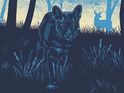 Mountain Lion feline mountainlion illustrator illustration graphicdesign vector