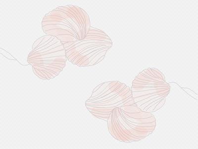 CShells shells pattern design symmetry