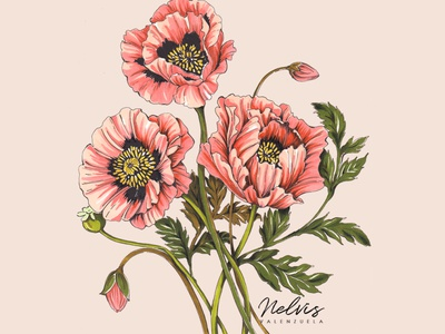 Shirley Poppies Day 1 challenge reduced poppy flower coral poppy coral flowers coral flowers leafy flower bud peach floral peach florals peach blossoms pink blossoms art print shirley poppies flores botanical illustration illustration marker art pink flowers pink poppies pink poppies poppies