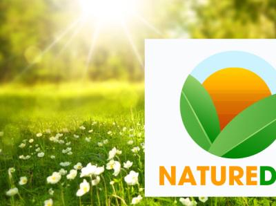 naturedaycom design typography leaf illustration sun nature