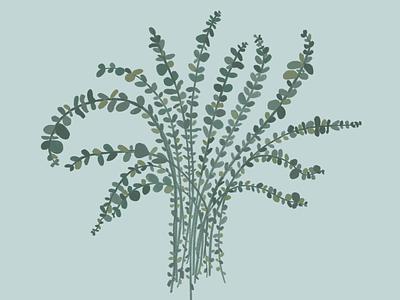eucalyptus green blue eucalipto eucalyptus