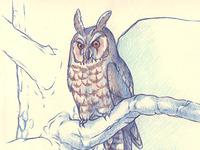 One owl