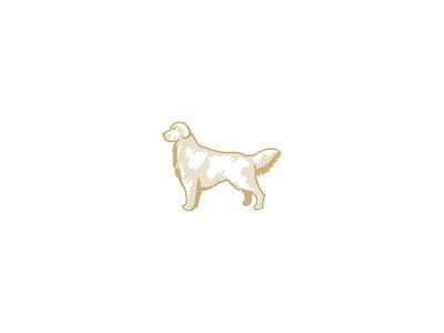 golden retriever pets animal paw retriever