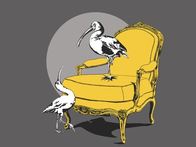 ibis birds rule royal detail ink throne birds procreate illustration digital illustration digitalart