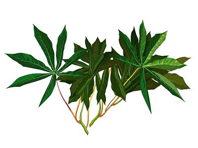 Leave of yuca tree méxico sample krotalon nature plant leaves