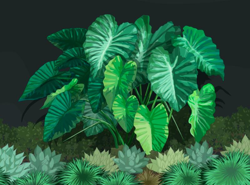 Xanthosoma Robustum krotalon natural digital ink plant illustration illustrator enviromental design enviromental environmental nature green poisonous poison plant