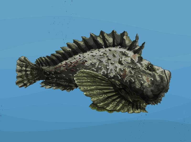Pez piedra camuflaje espinas mar abierto oceano fauna toxico veneno ilustración vectorial ilustración digital ilustración didactica ilustración científica pez venenoso