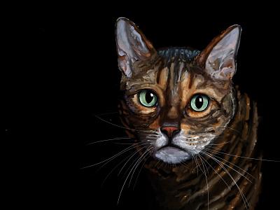 Little Stimpy méxico oil impasto autodesk sketchbook illustration krotalon cat
