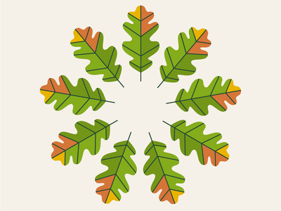 it's oak! illustration simple wacom vector minimal colour fall autumn oak tree