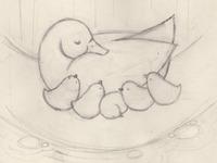 Ducks Sketch